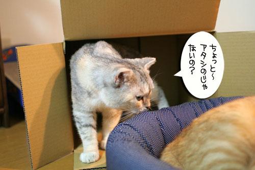 New猫ベッド争奪戦★前編_d0355333_16561981.jpg