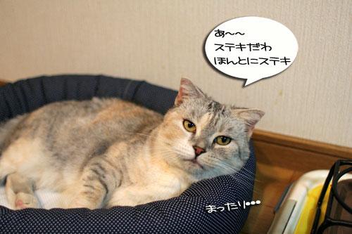 New猫ベッド争奪戦★前編_d0355333_16562157.jpg