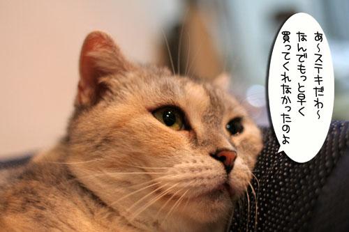 New猫ベッド争奪戦★前編_d0355333_16562269.jpg