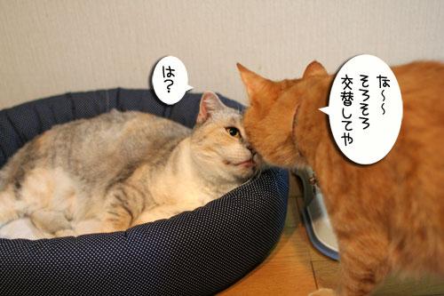New猫ベッド争奪戦★前編_d0355333_16562276.jpg