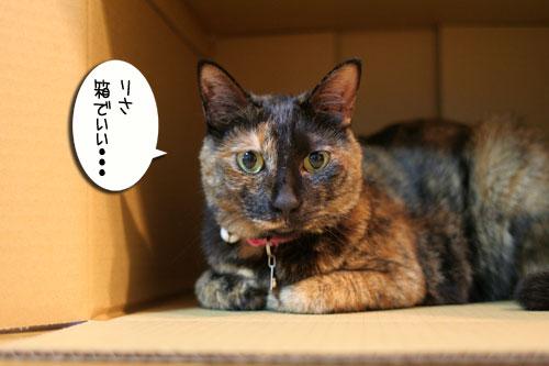 New猫ベッド争奪戦★前編_d0355333_16562315.jpg