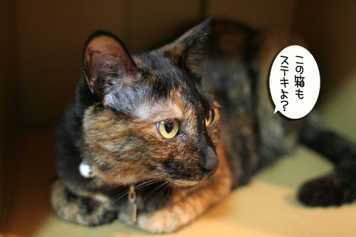 New猫ベッド争奪戦★前編_d0355333_16562357.jpg