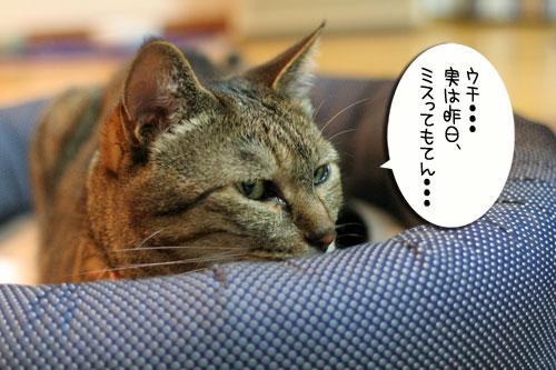笑子ちゃんのミス_d0355333_16565245.jpg