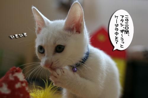 子猫の主張!_d0355333_17012996.jpg
