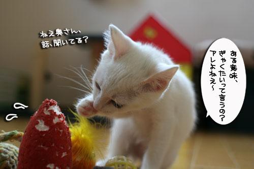 子猫の主張!_d0355333_17013032.jpg
