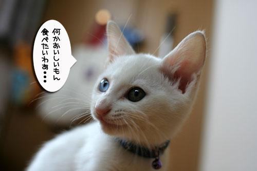 子猫の主張!_d0355333_17013042.jpg