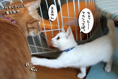 そこは子猫の場所_d0355333_17013336.jpg