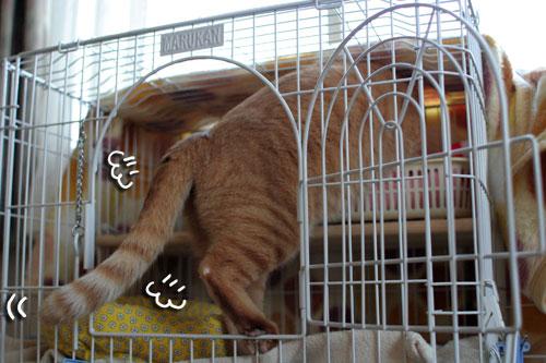 そこは子猫の場所_d0355333_17013395.jpg