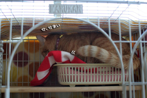 そこは子猫の場所_d0355333_17013426.jpg