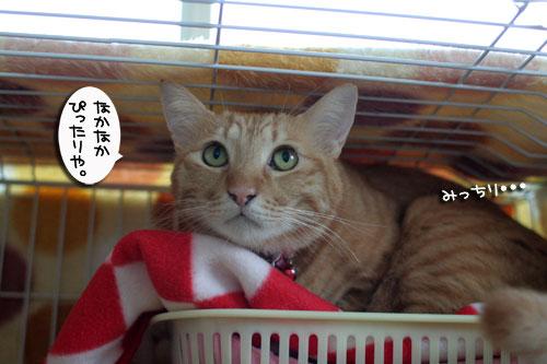 そこは子猫の場所_d0355333_17013456.jpg