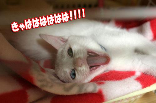 こねこが化け猫に!_d0355333_17014172.jpg