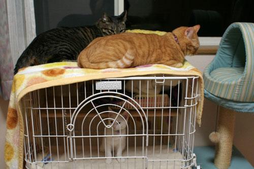 子猫に嫌がらせ_d0355333_17021238.jpg