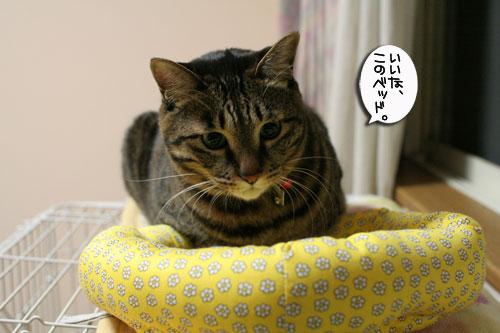 ミニ猫ベッド争奪戦_d0355333_17021449.jpg