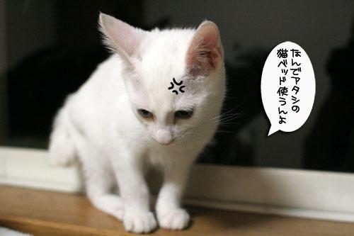 ミニ猫ベッド争奪戦_d0355333_17021510.jpg