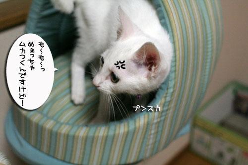 ミニ猫ベッド争奪戦_d0355333_17021542.jpg