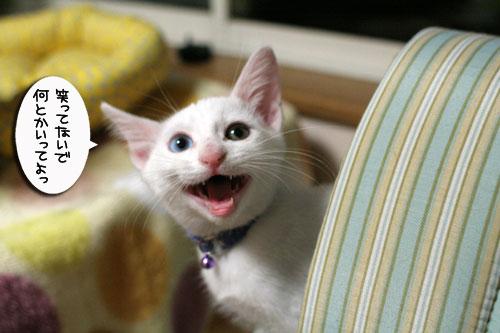 ミニ猫ベッド争奪戦_d0355333_17021578.jpg