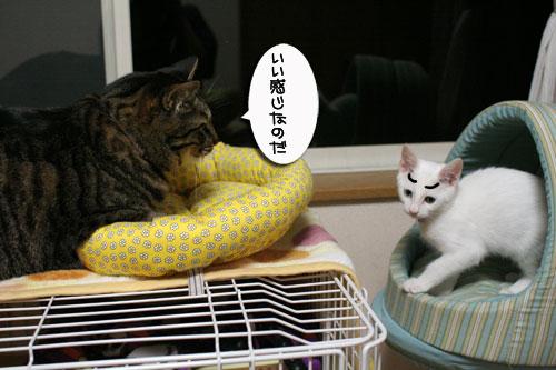 ミニ猫ベッド争奪戦_d0355333_17021581.jpg