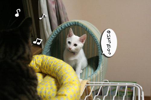 ミニ猫ベッド争奪戦_d0355333_17021599.jpg