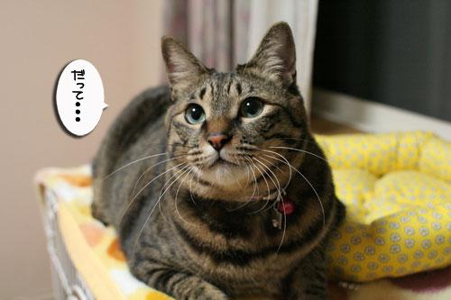 ミニ猫ベッド争奪戦_d0355333_17021607.jpg