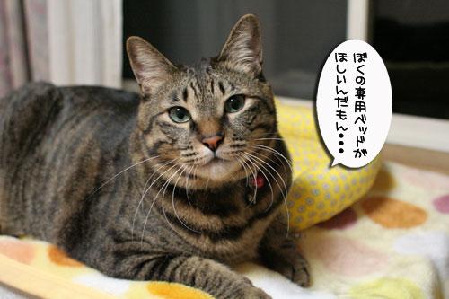 ミニ猫ベッド争奪戦_d0355333_17021661.jpg