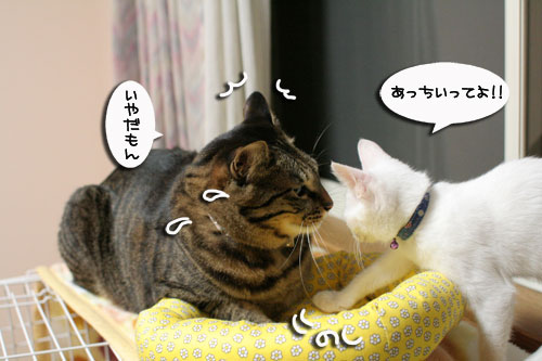 ミニ猫ベッド争奪戦_d0355333_17021663.jpg