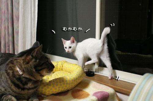 ミニ猫ベッド争奪戦_d0355333_17021666.jpg