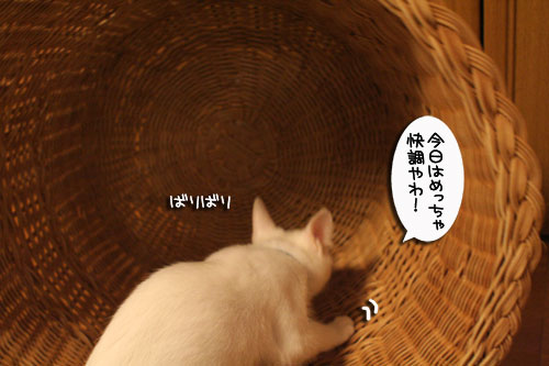 KYな子猫_d0355333_17021874.jpg