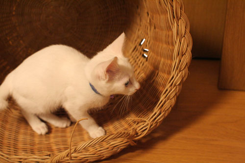 KYな子猫_d0355333_17021935.jpg
