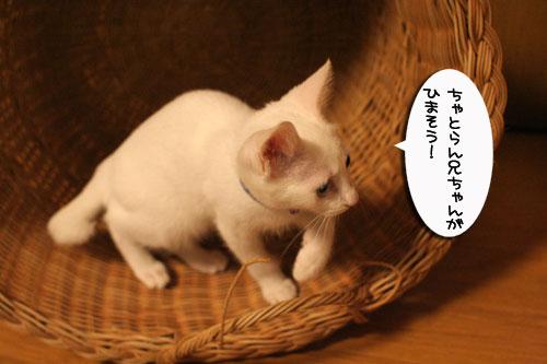KYな子猫_d0355333_17021956.jpg