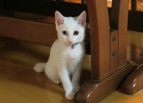幸せの子猫_d0355333_17022099.jpg