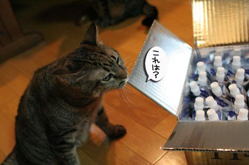 美白の水、飲んでみる?_d0355333_17022630.jpg