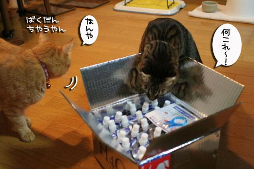 美白の水、飲んでみる?_d0355333_17022650.jpg
