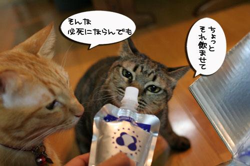美白の水、飲んでみる?_d0355333_17022715.jpg