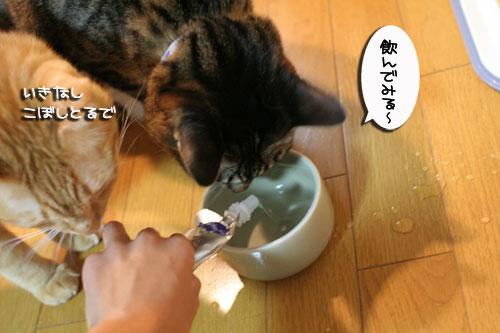 美白の水、飲んでみる?_d0355333_17022846.jpg