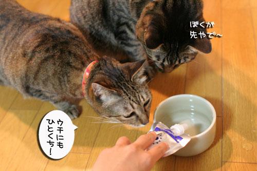 美白の水、飲んでみる?_d0355333_17022860.jpg
