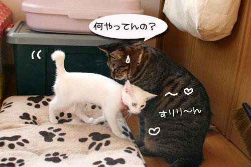 子猫の方が上手。_d0355333_17025718.jpg