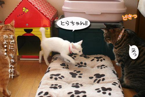 子猫の方が上手。_d0355333_17025766.jpg