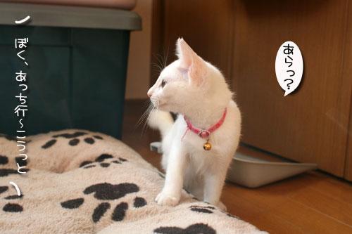 子猫の方が上手。_d0355333_17025767.jpg