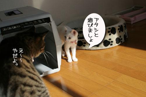 子猫の方が上手。_d0355333_17025790.jpg
