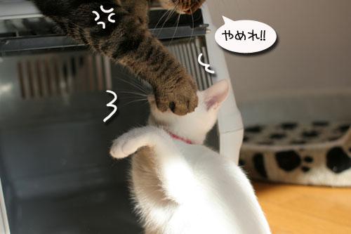 子猫の方が上手。_d0355333_17025819.jpg