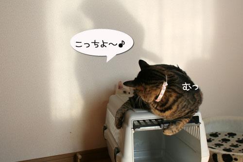 子猫の方が上手。_d0355333_17025936.jpg
