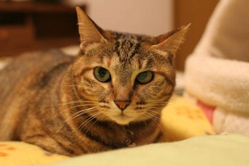 飛行猫あきほ_d0355333_17031554.jpg