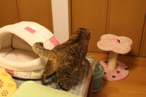 飛行猫あきほ_d0355333_17031569.jpg