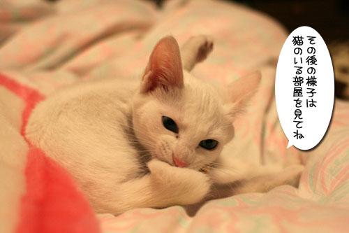 飛行猫あきほ_d0355333_17031604.jpg