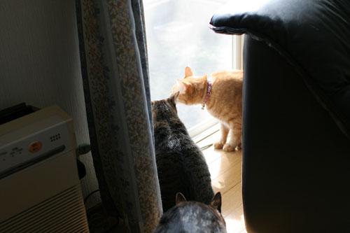 仲良しが集まる窓際で_d0355333_17031735.jpg