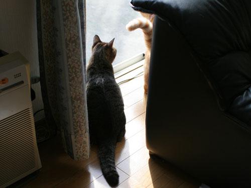 仲良しが集まる窓際で_d0355333_17031743.jpg
