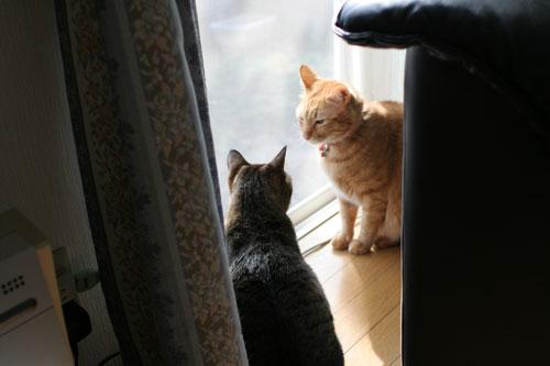 仲良しが集まる窓際で_d0355333_17031745.jpg
