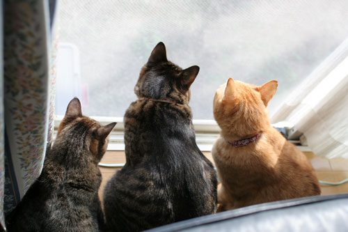 仲良しが集まる窓際で_d0355333_17031754.jpg