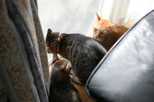 仲良しが集まる窓際で_d0355333_17031767.jpg