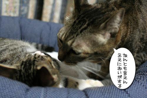 好かれる子猫_d0355333_17031935.jpg